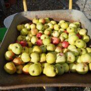 Æbler i trillebør