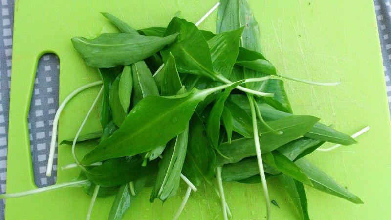 Blade fra ramsløg
