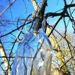 Flaske på birketræ