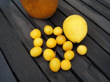 Gul Mirabelle marmelade