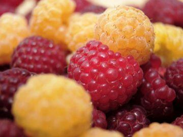 Røde og gule hindbær