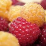 Hindbærsnaps af røde hindbær