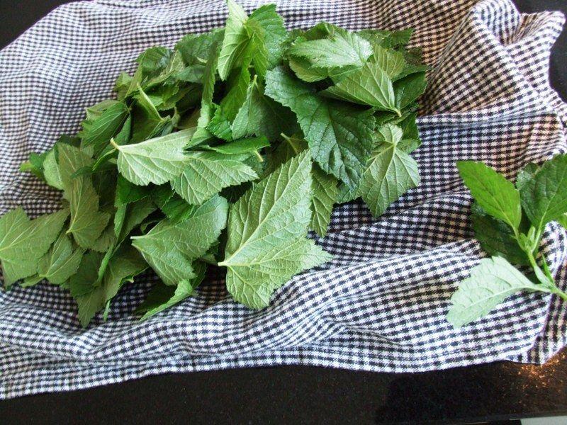 Solbærblade til kryddersnaps