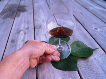 Valnød portvins snaps i højt glas