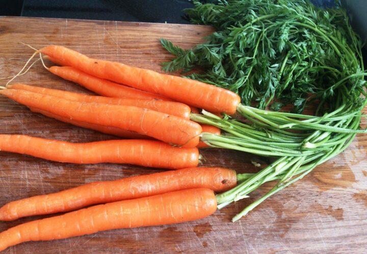 Gulerødder med stilk